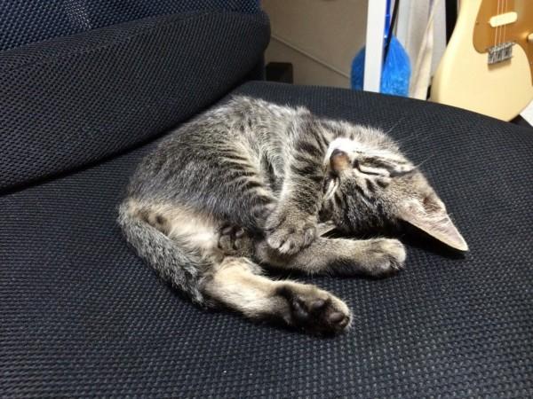 cat_00004