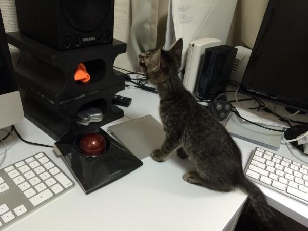 cat_00008