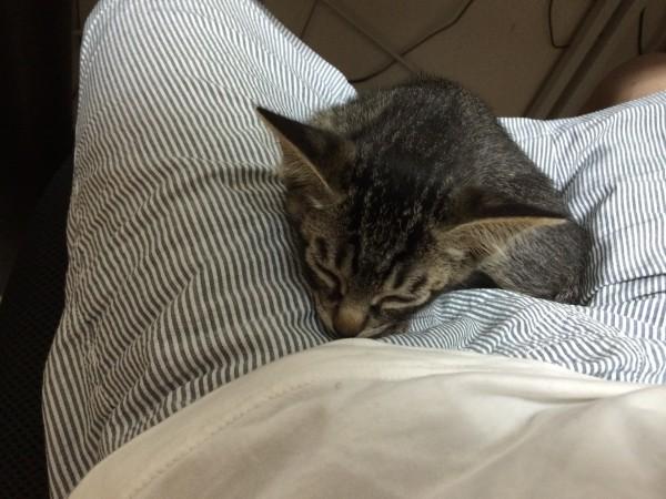 cat_00011