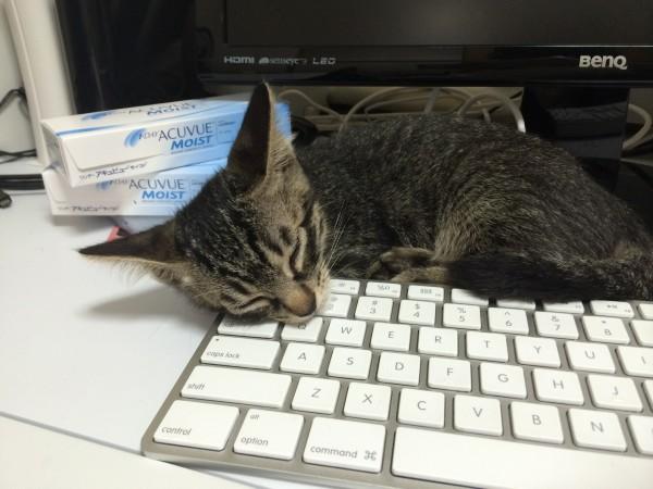 cat_00013