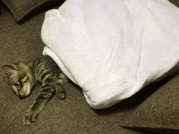 cat_00018