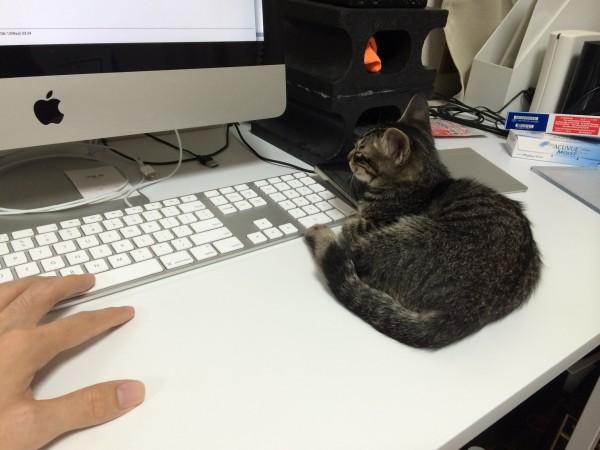 cat_00020